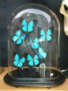 Ook leuk om 1 onder mn mini-stolpje van de Action te doen > Stolp vlinders
