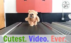 This dog dressed as a teddy bear on a treadmill? Too much cuteness. | Fit Bottomed Girls