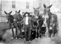 G. W. Myers & Mules