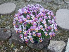 Many little flowers