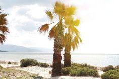 #palms #sardinia #sea #sun #italy #holiday #amazing #nature  by Aste Mudeneite