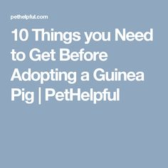 10 Things you Need to Get Before Adopting a Guinea Pig | PetHelpful