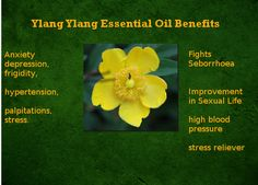 Benefits of ylang-ylang essential oil: Combats the improvement of seborrhea in sexual .Ylang Ylang Essential Oil Benefits: Combats Seborrhea Improvement in Sex Life Hypertension Stress ReliefLoading. Patchouli Oil, Patchouli Essential Oil, Jojoba Oil, Essential Oil Blends, Essential Oils, Avon, Facial Wash, Oil Benefits, Natural Oils
