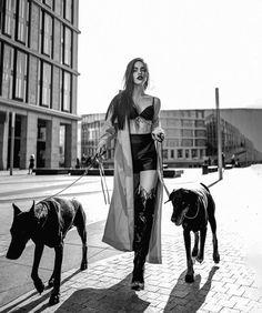 Black Doberman, Doberman Dogs, Doberman Pinscher, Dobermans, Scary Dogs, Bad Girl Aesthetic, Family Dogs, Animal Photography, Cute Dogs