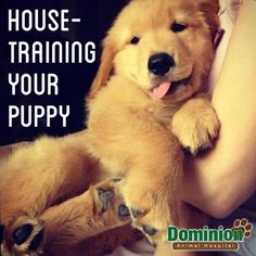 If you're the proud new owner of an adorable puppy, you're probably wondering many different things regarding how to raise this new member of your family. From accident prevention to cleaning, there are many things to take into consideration. This article is packed with useful advice on housetraining your puppy.