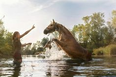 Seepferdchen😁🐴 Steigender Haflinger im Sonnenuntergang von Jrkphotography Beautiful Gorgeous, Horses, Animals, Seahorses, Sunset, Animales, Animaux, Animal, Animais