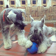 Lets playyyyyy ball! ,,,,,,