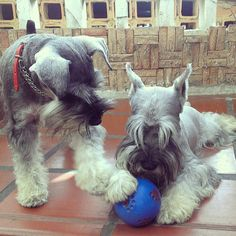 Lets playyyyyy ball! ,,,,,,