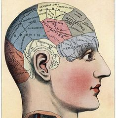Items similar to Fridge Magnet Brain phrenology diagram map human nature characteristics on Etsy