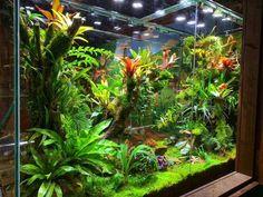 Gecko Terrarium, Terrarium Plants, Bonsai Plants, Paludarium, Vivarium, Reptile Room, Reptile Cage, Pet Frogs, Moss Garden