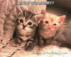 Adorable Kittens Chester and Betsy <3
