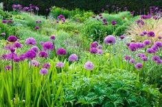 Image result for trees and alliums
