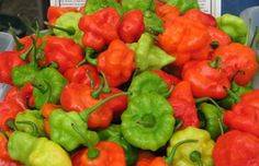 AJI DULCE #1 ,Pepper Seeds,Known As ajicitoo,aji gustoso,ají cachucha & sweet habanero~Heirloom, Organically Grown pepper-little to no h