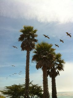 The pelicans of Pleasure Point Pleasure Point, The Neighbourhood, Photographs, Friday, Beautiful, Santa Cruz, Photos, The Neighborhood, Cake Smash Pictures