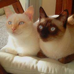 Mia&Miu......i miei bambini 💛💙