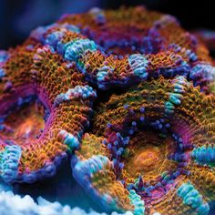 "Sea Coral - Rainbow Acan 2 - ""This color combination definitely sings! When I first saw this picture I thought I was looking at crochet work! At any rate, I will definitely be turning this into crochet and then I'll be the one singing!"" #KnittingGuru http://www.pinterest.com/KnittingGuru"