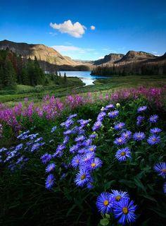 wild flower magic