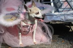 Happy Howl-oween! Costumed dogs rule at Tompkins Square Halloween Dog Parade
