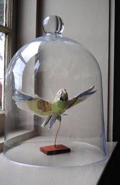Paper bird sculpture under cloche by Anna-Wili Highfield. Glass Bell Jar, The Bell Jar, Glass Domes, Bell Jars, Cardboard Sculpture, Bird Sculpture, Paper Sculptures, Textile Sculpture, Paper Birds