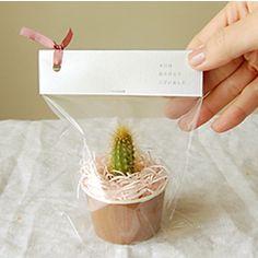 多肉植物/サボテン専門ストア solxsol - ゲストの方の喜ぶ顔が見たいから、笑顔がこぼれるサボテンのプチギフト!