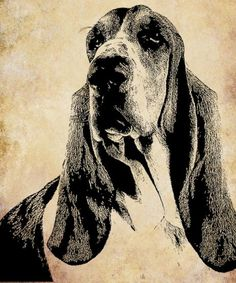 Basset hound chien face Digital Image Download animaux animaux art graphique abstract illustration impressionniste