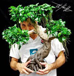 """Anubias Tree"" #oliverknott #ok_aqua #okplants"