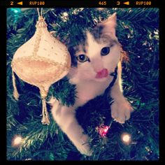 Saboreando la Navidad