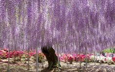 Most beautiful places in the world: Ashikaga Flower Park - The Tree