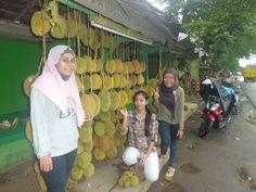 panen raya durian mayang jember
