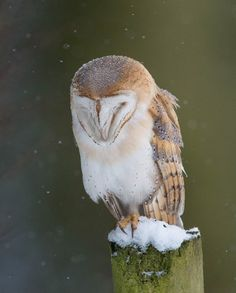 How to support backyard wildlife this winter