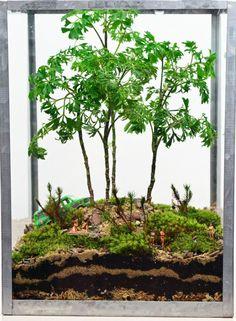 Forest Terrarium fro