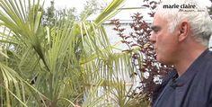 Quels arbustes choisir pour son balcon