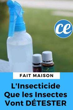 Un insecticide fait maison naturel.