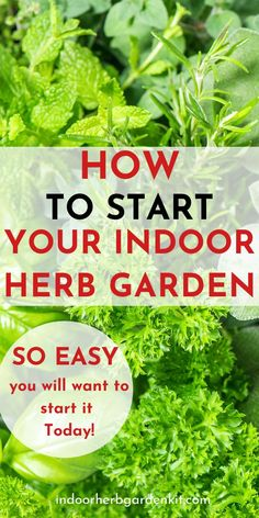 Do you want to start your own Indoor Herb Garden? Click now to see how you can start your Indoor Herb Garden today it is so simple. Gardening For Beginners, Gardening Tips, Diy Herb Garden, Herb Garden Pallet, Garden Guide, Easy Garden, Garden Ideas, Indoor Gardening Supplies, Kitchen Herbs