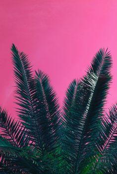 COLOR | Pink & Plant