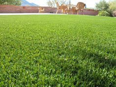Synthetic grass by Southwest Greens Tucson