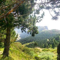 Bonita vista. #green #mountains