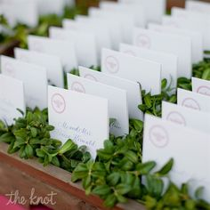 seating cards in boxwood