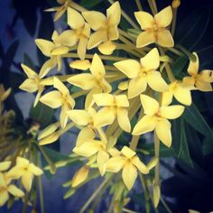 Flores na Unidade Laranjeiras