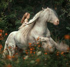 Милые Животные, Лошади, Домашние Питомцы, Google, Ребенок, Органайзер, Фотография