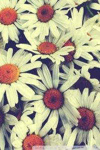 12_pretty_iphone_wallpapers