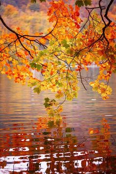 Beautiful Fall colors on the lake Fall Pictures, Pretty Pictures, Autumn Photos, Autumn Scenes, All Nature, Belle Photo, Beautiful Landscapes, Beautiful World, Beautiful Places
