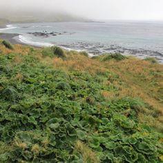 Macquarie Island declared pest free