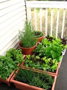 A container vegetable garden!  Very easy to take care of, and it keeps veggies that spread in their place!