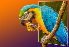 A MACAW AT HAMILTON ZOO NZ | HDR creme