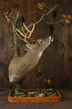 Browsing Buck - this is neat, but I'd prefer it in the corner, not on a base...