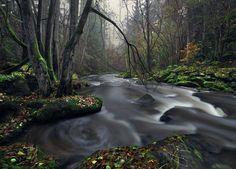 Between Autumn and Winter by Kilian Schönberger, via 500px