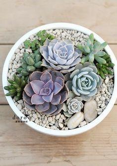 Urbanika Moda: Decorando con cactus y suculentas / Decorating with cacti and succulents