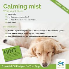 Essential oils can help boost your dog's immune system, fight problems such as itchy skin, separation anxiety, or digestive upset (to name but a few), and increase the level of trust and understanding between you www.wonmarketplace.com