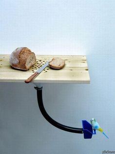 sustainable household solution #bread #slice #parrot #recycle Very cool